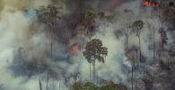 Лесные пожары, фото из архива