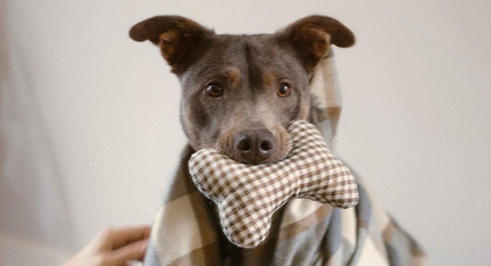 Zara не даст собакам замерзнуть