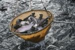 Forel balıqları, arxiv şəkli