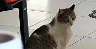 Беременная кошка пришла в центр семейного здоровья