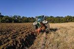 Трактор вспахивает поле, фото из архива