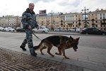 Сотрудник правоохранительных органов с собакой на улице в Санкт-Петербурге в связи с усилением мер безопасности