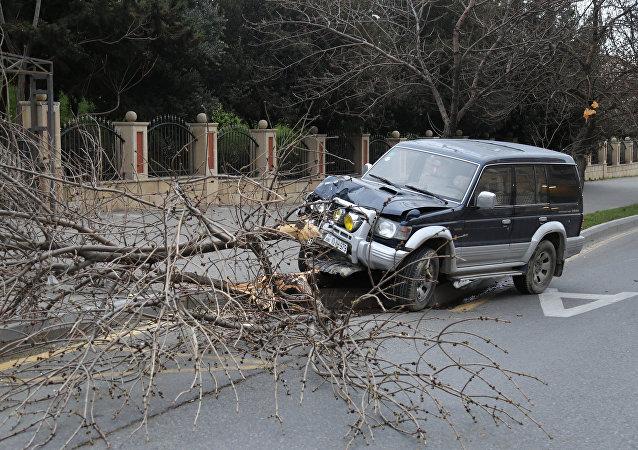 В Баку из-за сильного ветра автомобиль врезался в дерево