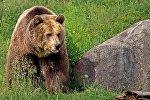 Медведь, фото из архива