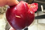 Восточная плодожорка на плодах свежих фруктов