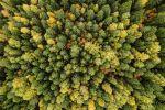 Лес в  Пермском крае, фото из архива