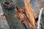 Поврежденный в результате обстрела ствол садового дерева, фото из архива