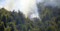 Пожар в Гирканском национальном парке, фото из архива