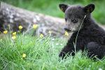 Медвежонок, фото из архива