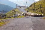 Пастух, пасущий овец, фото из архива