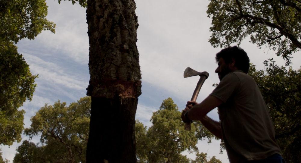 Вырубка дерева, фото из архива