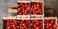 Урожай томатов, фото из архива