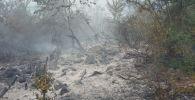 Лесной пожар, фото из архива