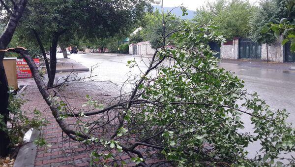 Поваленное дерево - Sputnik Азербайджан