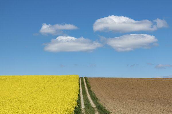 Организованные облака над цветущим рапсовым полем в Германии  - Sputnik Азербайджан