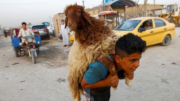 Мальчик несет овцу на рынке скота в Наджафе, Ирак - Sputnik Азербайджан