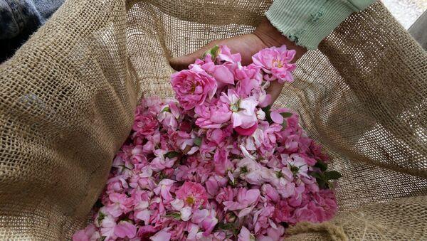 Дамасские розы, фото из архива - Sputnik Азербайджан