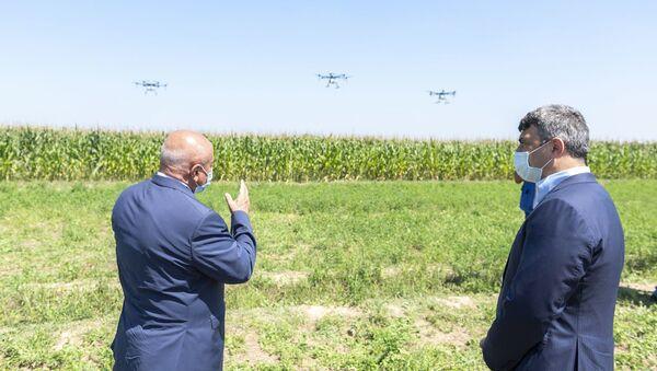 Qarğıdalı sahələri dronlar vasitəsilə dərmanlanıb - Sputnik Азербайджан