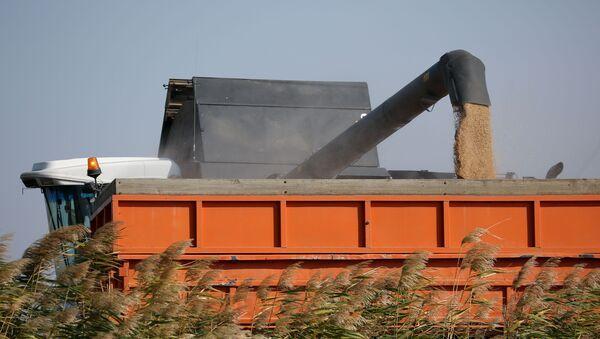 Уборка и переработка урожая риса, фото из архива - Sputnik Азербайджан