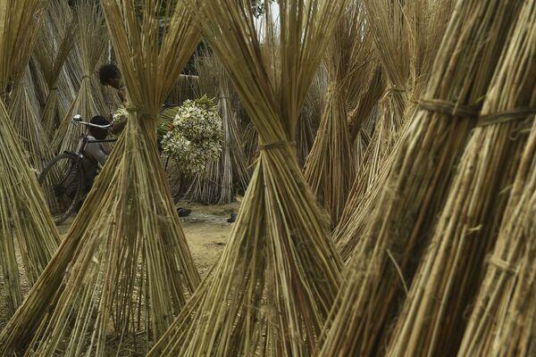Фермер везет на своем велосипеде пучки водяных лилий на продажу на окраине Калькутты, Индия - Sputnik Азербайджан