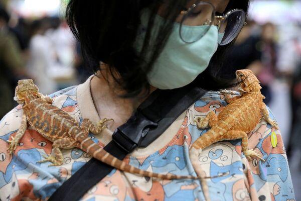 Женщина с гекконами на выставке Pet Expo Thailand в Бангкоке - Sputnik Азербайджан