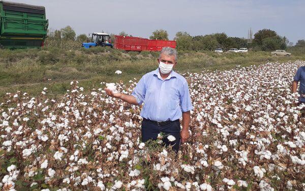 Сбор урожая хлопка в Евлахе - Sputnik Азербайджан