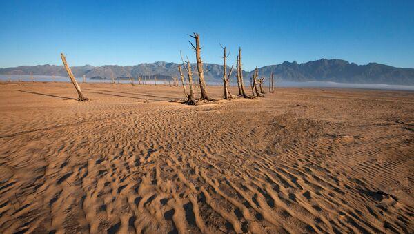 Засохшие стволы деревьев, фото из архива - Sputnik Azərbaycan