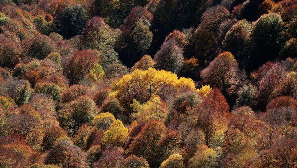 Сухие деревья, фото из архива - Sputnik Азербайджан
