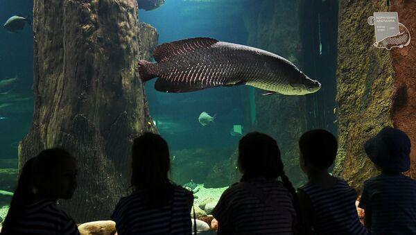Посетители у аквариума  - Sputnik Азербайджан