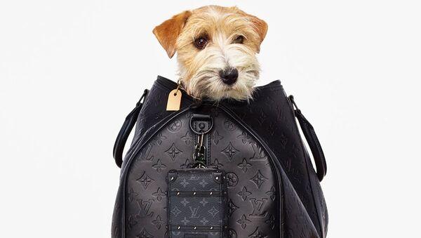 6 брендов, новые коллекции которых рекламируют щеночки  - Sputnik Азербайджан