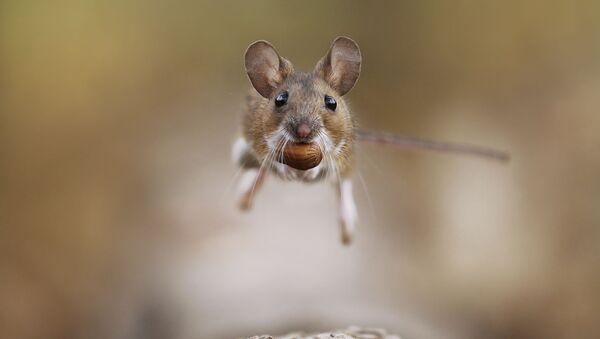Снимок Прыжок австрийского фотографа Юлиан Рад, победивший в категории Поведение животного конкурса Золотая Черепаха-2020 - Sputnik Azərbaycan