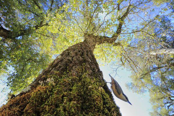 Снимок В лесу испанского фотографа Андрес Луис Домингес Бланко, победивший в категории Природа глазами детей конкурса Золотая Черепаха-2020 - Sputnik Азербайджан