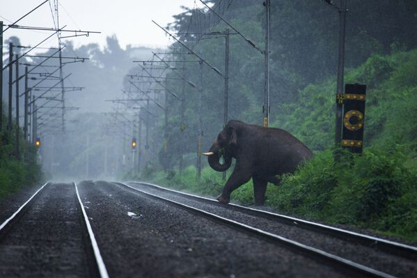 Снимок Осторожность не повредит индийского фотографа Анееш Санкаранкутти, победивший в категории Человек и природа конкурса Золотая Черепаха-2020 - Sputnik Азербайджан
