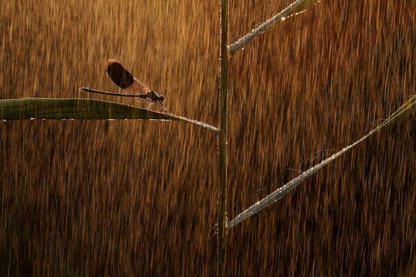 Снимок Золотой дождь венгерского фотографа Норберт Касаш, победивший в категории Микромир конкурса Золотая Черепаха-2020 - Sputnik Азербайджан
