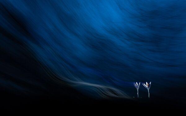 Снимок Крокусы в тумане венгерского фотографа Тибор Литауски, победивший в категории Магия растений конкурса Золотая Черепаха-2020 - Sputnik Азербайджан