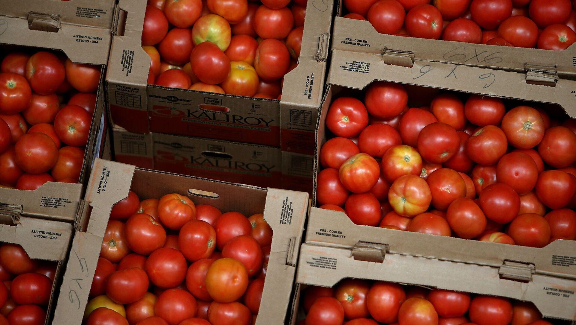 Урожай томатов, фото из архива - Sputnik Азербайджан, 1920, 28.04.2021