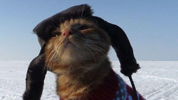 Как кот сопровождает хозяина на рыбалке - забавное видео - Sputnik Азербайджан