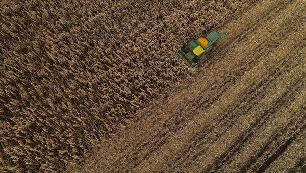 Кукурузоуборочный комбайн проезжает через поле, фото из архива - Sputnik Азербайджан