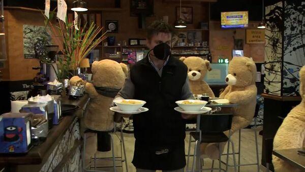 Мишки Тедди в итальянском баре - Sputnik Азербайджан
