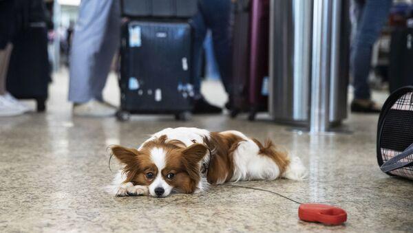 Собака в аэропорту, фото из архива - Sputnik Азербайджан