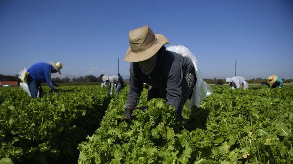 Фермеры на поле, фото из архива - Sputnik Азербайджан