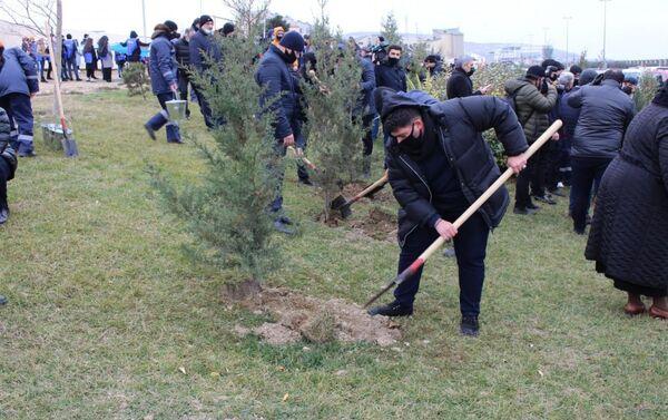 Акция по посадке деревьев в Сабаильском районе Баку - Sputnik Азербайджан