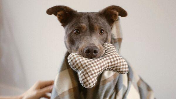 Zara не даст собакам замерзнуть - Sputnik Азербайджан