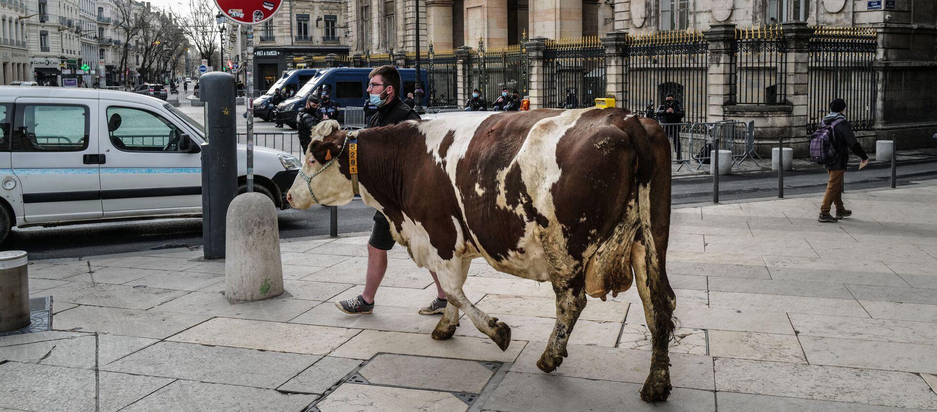 Фермер выгуливает корову перед мэрией Лиона во время акции против предложения исключить мясо из меню школьных столовых - Sputnik Азербайджан, 1920, 28.02.2021