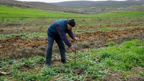 Садовые хозяйства для малообеспеченных семей - Sputnik Азербайджан