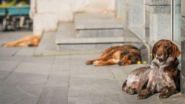 Собаки в Кутаиси - Sputnik Азербайджан