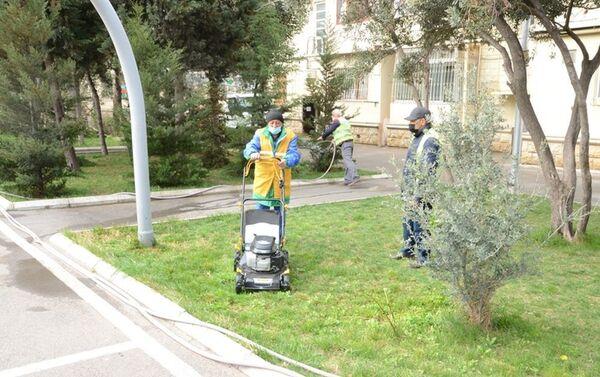 Работы по озеленению в Баку - Sputnik Азербайджан