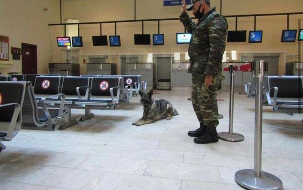 Учения кинологического подразделения Службы спасения особого риска министерства по чрезвычайным ситуациям  - Sputnik Азербайджан