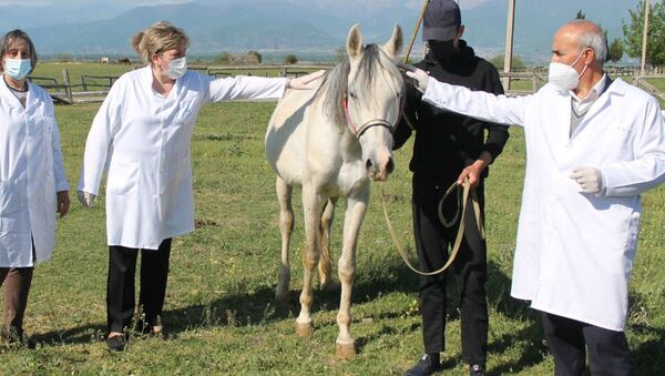 Atlar üçün sığınacaq - Sputnik Azərbaycan