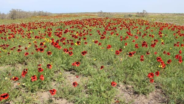 Аггельский Национальный парк - Sputnik Azərbaycan